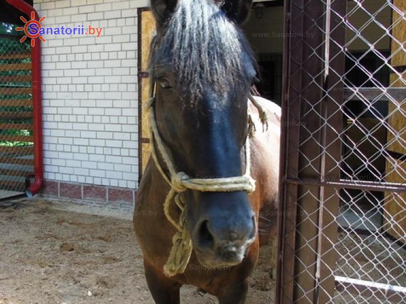 Санатории Белоруссии Беларуси - санаторий Солнечный - Иппотерапия (лошади)