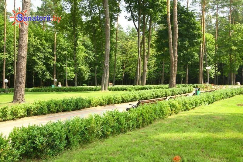 Санатории Белоруссии Беларуси - санаторий Свитязь - Территория и природа