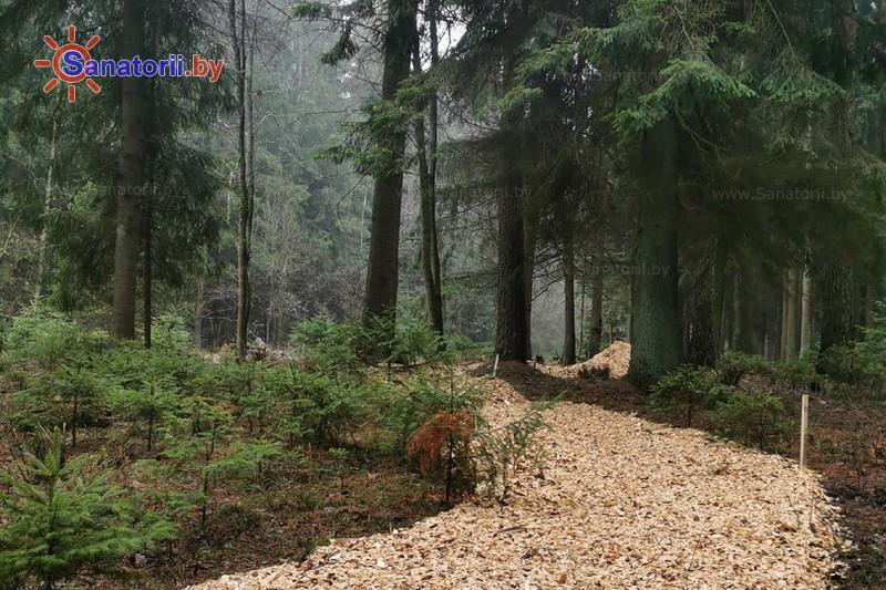 Санатории Белоруссии Беларуси - санаторий Веста - Тропа здоровья