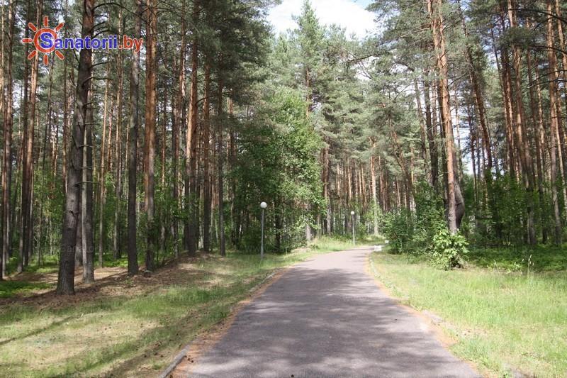 Санатории Белоруссии Беларуси - санаторий Журавушка - Территория и природа