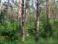 оздоровительного комплекса Белино - Территория и природа
