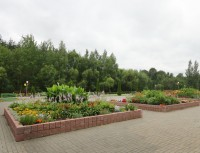 Лесная поляна - Территория и природа
